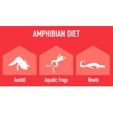 Pokarm dla żab, aksolotlów, traszek AMPHIBI GOLD 300g